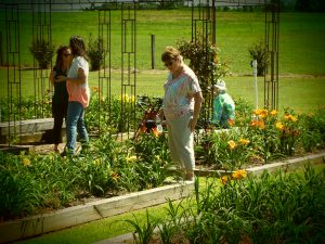 A woman stands near a plant bed with two other ladies in distance